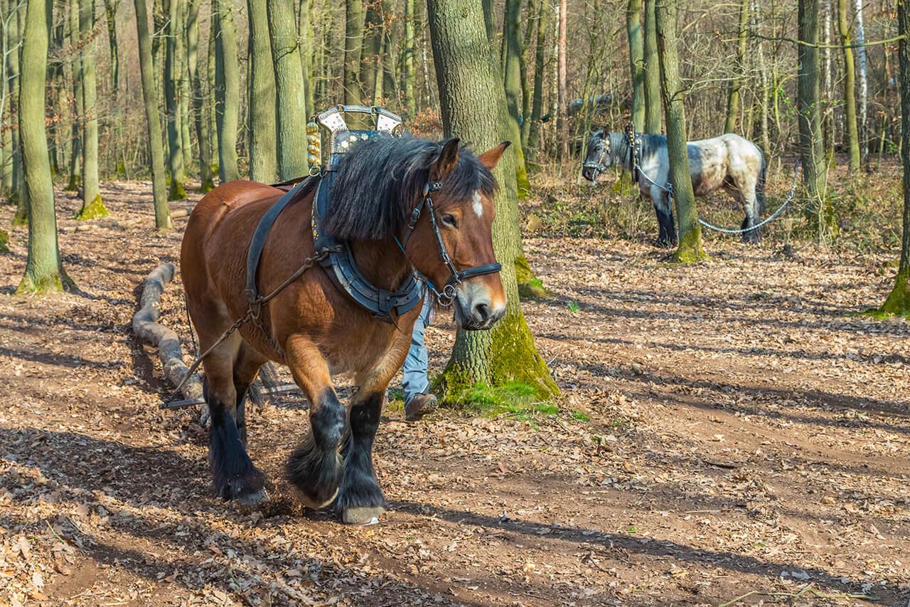 Baumernte mit Pferd