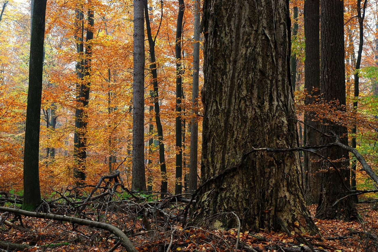Dauermischwald - ein intaktes Ökosystem