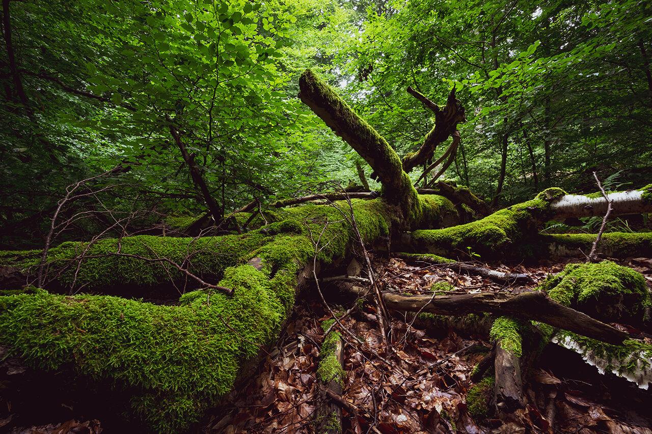 Intakter Waldboden