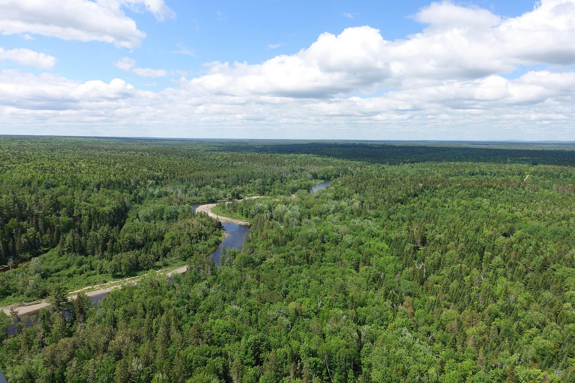 Waldflächen in Doaktown New Brunswick